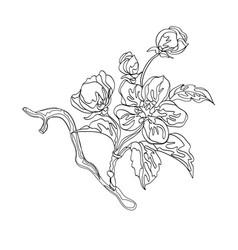 Blossom apple branch vector