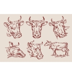 hand drawn sketch set cow and bull vector image