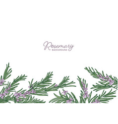 Horizontal herbal backdrop decorated with rosemary vector