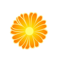 Marigold flower vector