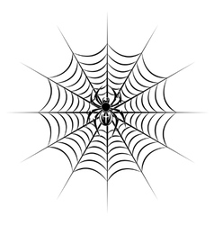 Spider on web vector image vector image