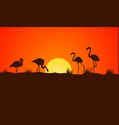 On orange background at sunset flamingo vector