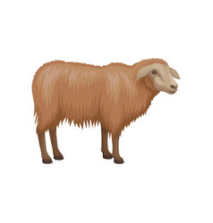 Flat icon of cute young sheep domestic vector
