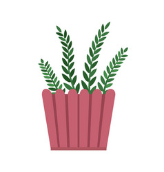 rosemary room plant pink pot vector image