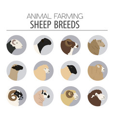sheep breed icon set farm animal flat design vector image