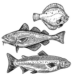 Cod salmon flounder fish isolated on white vector