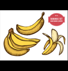 collection of hand drawn colored bananas vector image