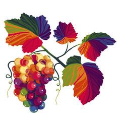 Grape detail vector