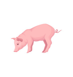 Icon of stranding pink pig isolated on vector
