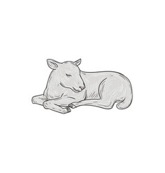 Lamb sleeping drawing vector