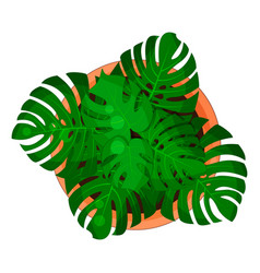 monstera plant in a flower pot for home and vector image