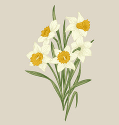 spring flowers daffodils vector image