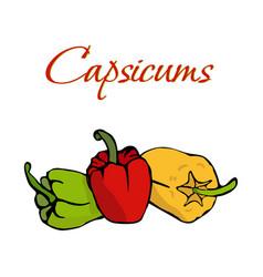 tasty veggies capsicums vector image