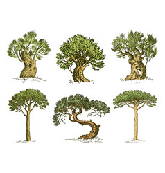 big set of engraved hand drawn tree include pine vector image vector image