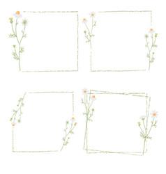 Beautiful minimal white chamomile flower square vector
