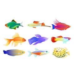 Common and rare aquarium fish set vector