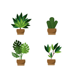 isolated plants design vector image