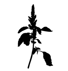 wild herb silhouette vector image