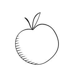 apple sketh vector image vector image