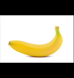 realistic banana isolated on white background vector image vector image
