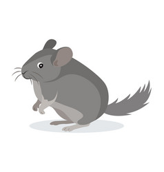 cute gray chinchilla icon fluffy pet domestic vector image
