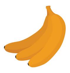 fresh banana on white background vector image