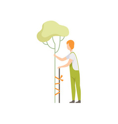 gardener caring for a tree in the garden people vector image