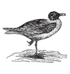 Gray gull vintage vector