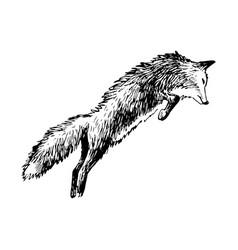 hand drawn fox vector image