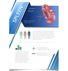 Internal human organs infographic spleen vector