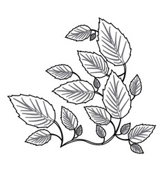Monochrome contour with creeper plant vector