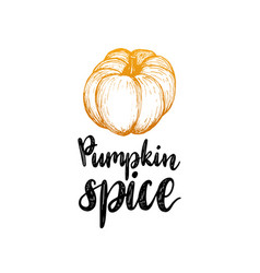 pumpkin spice lettering on white background hand vector image