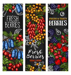 Wild berry or fresh fruit blackboard banner design vector