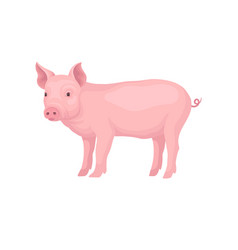 Young piglet standing isolated on white background vector