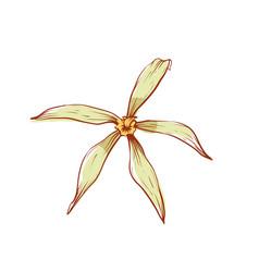 Beautiful vanilla flower isolated icon vector