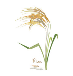 Cereals legumes plants rice with leaves grains vector
