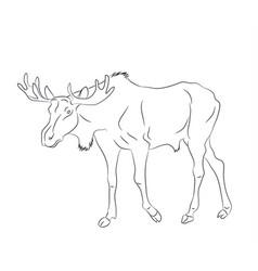 deer stands drawing lines vector image