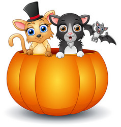 happy cat and bat cartoon inside pumpkin vector image