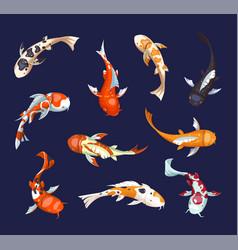 set of koi carps koi japanese fish vector image