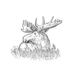 Moose or common european elk drawing vector