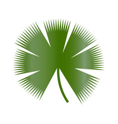 leaf of tropical plants isolated items palm tree vector image