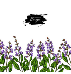 sage drawing border isolated plant vector image