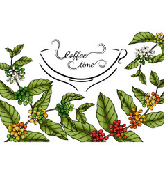 Coffee flower and leaf drawing with line art on vector