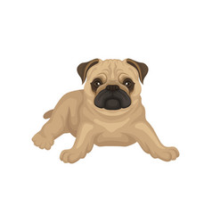 flat icon of pug puppy lying isolated on vector image