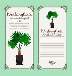 vintage label with washingtonia plant vector image