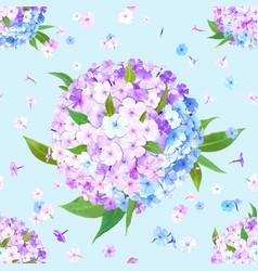 flox flower seamless pattern vector image
