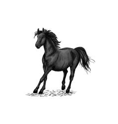 Black horse racing in gallop vector image vector image