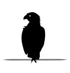 Silhouette of Eagle black vector image vector image