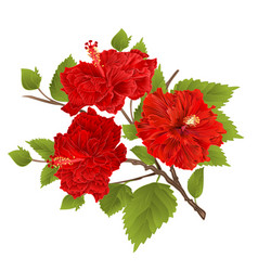 branch red hibiscus tropical flowers on a white vector image