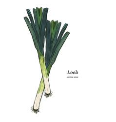 leek hand drawn isolated vegetable vector image